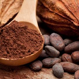 cacao y chocolate