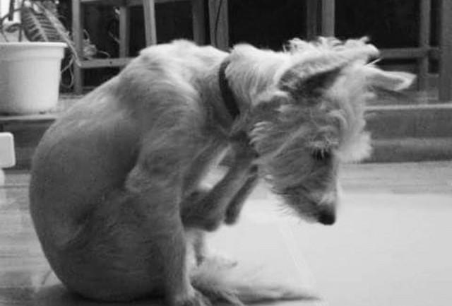 Doga ¡Práctica Yoga con tu perro!