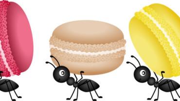 A nova fonte de proteínas…os insetos?