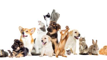 7 tipos de animales adecuados para vivir en un piso
