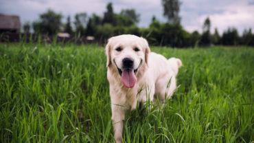Cómo proteger a tu mascota de los golpes de calor