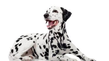 Hora de elegir: ¿alimentación seca o alimentación húmeda para tu perro?