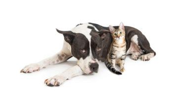 Protege a tu perro de las temidas procesionarias