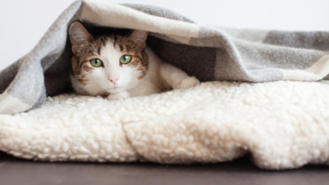 Seis cosas que tu gato detesta y debes evitar