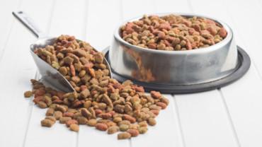 ¿Qué ingredientes debe llevar un buen pienso para tu perro?