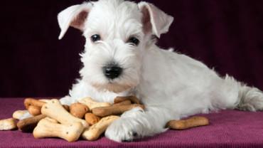 Receta de galletas caseras para tu perro