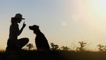Beneficios de adoptar un perro