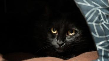 Superstições e mitos dos gatos pretos