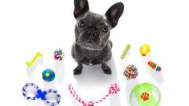 Cinco juegos con tu perro para días lluviosos