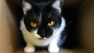 Sabes como acalmar o stress do teu gato?